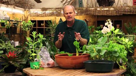 grow vegetables indoors   pot youtube