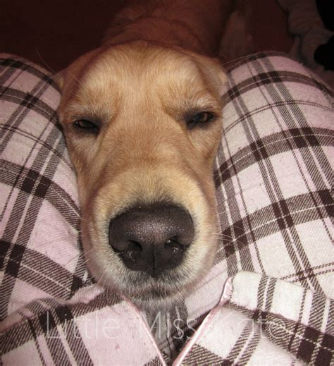 puppy allergies seasonal allergy relief for your pets itchypetseeyourvet miss kate