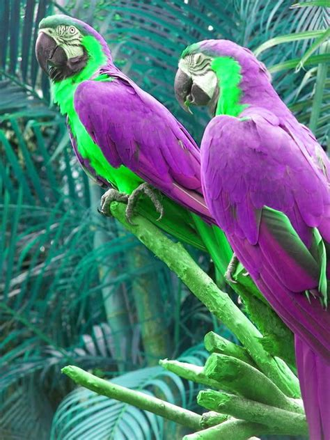 beautiful green color purple parrots to see beautiful parrot bird