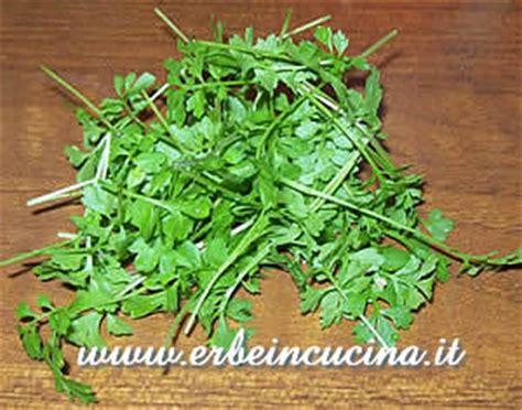 crescione in cucina erbe in cucina il crescione in cucina