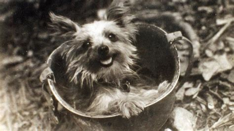 yorkie memorial smoky quot yorkie doodle dandy quot wynne 1943 1957 find a grave memorial