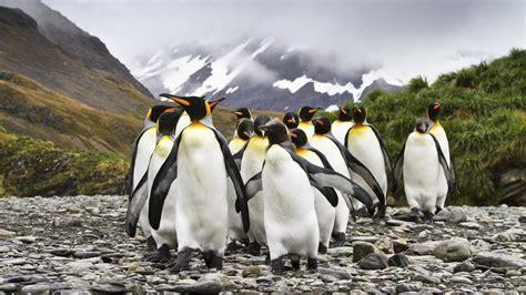 understanding a photograph penguin penguin watch serious fun cool green science