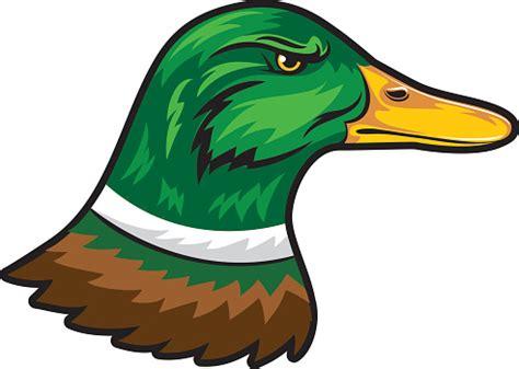mallard duck clipart  clip art