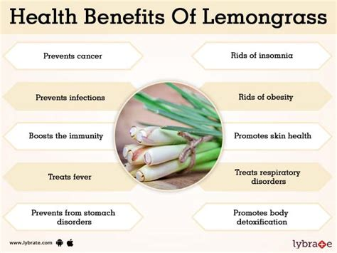 Benefits of Lemongrass And Its Side Effects | Lybrate Lemongrass Benefits Cancer