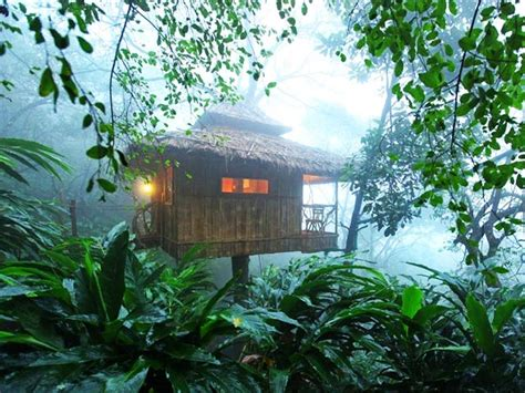 tree in top 5 tree house resorts in kerala kerala backwaters