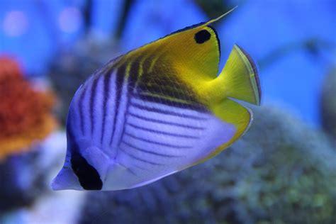 fish seaanimals aneka ikan laut oceanworld free photo fish sea creatures marine free image