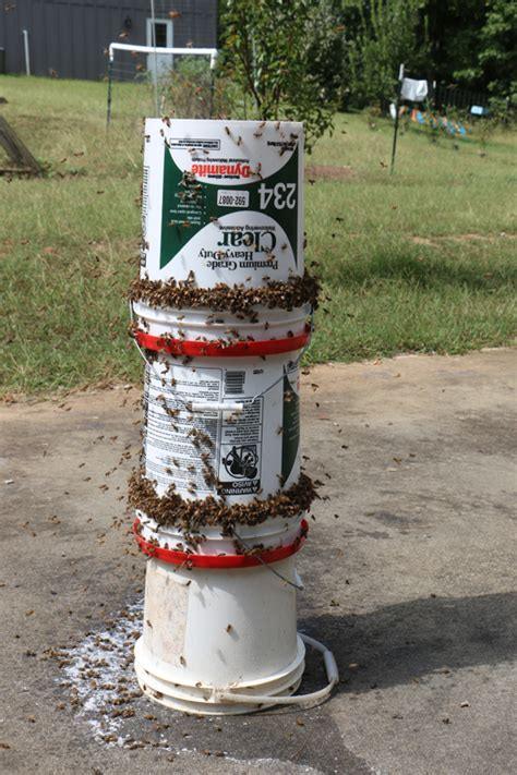 diy bee yard feeder video keeping backyard bees