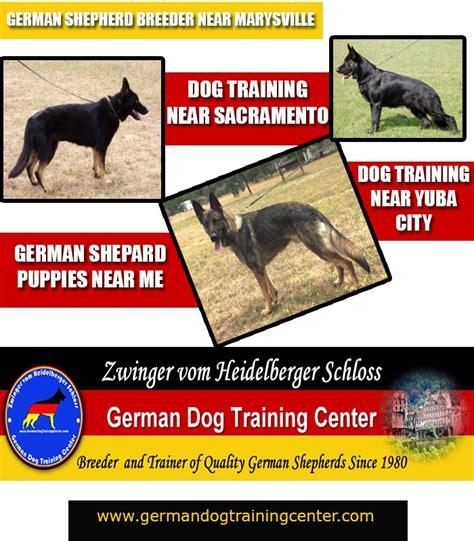 agility classes near me german shepherd school near me