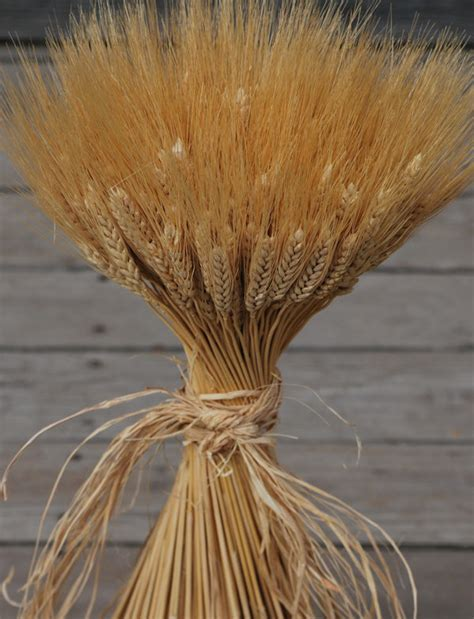 Grasses Grains Branches In Centerpieces On Pinterest Dried Wheat Centerpieces