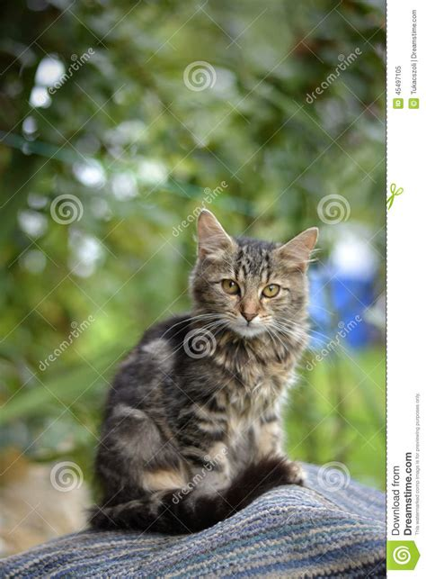 cat in backyard cat in the yard stock photo image 45497105