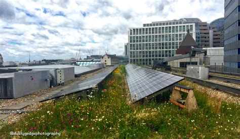green roof pollinators and solar energy on a green roof a win win