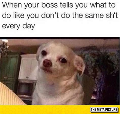 Annoyed Dog Meme - i do the same thing everyday the meta picture