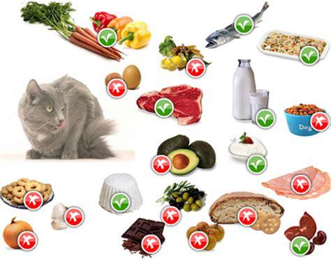 alimenti per gattini salute cibi pericolosi per il gatto