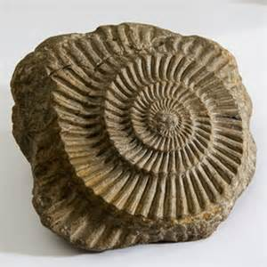 horniman wildlife fantastic fossils events visit