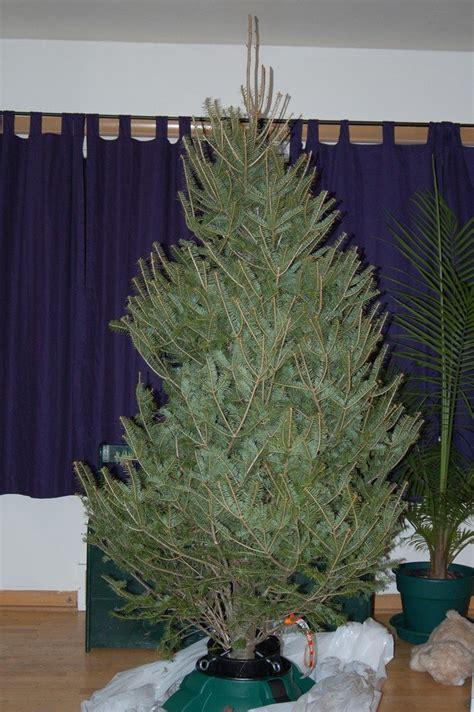 caring    christmas tree   home christmas