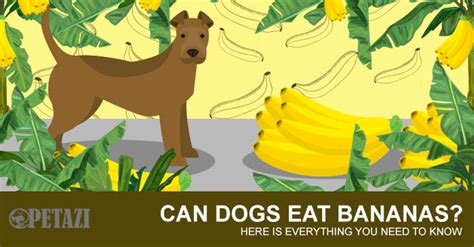can you give dogs bananas can dogs eat bananas your best answer can be found here petazi