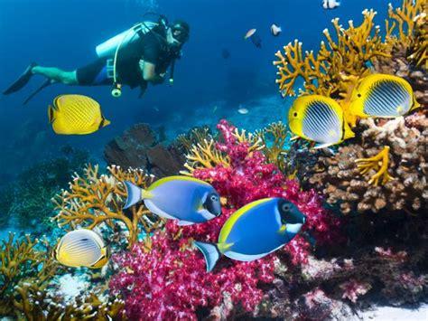 dive cook islands dive and surf shop cook islands your dive snorkeling