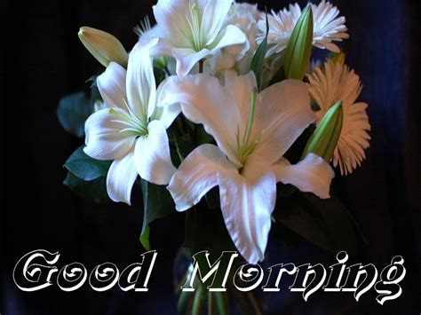 Beautiful White Flowers Images for Good Morning   Festival