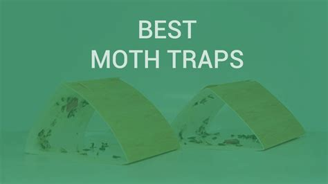 pantry moth traps insect
