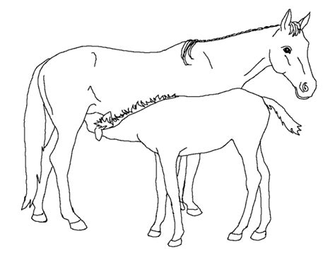 coloring pages animals horses coloring page horse animal coloring pages 26