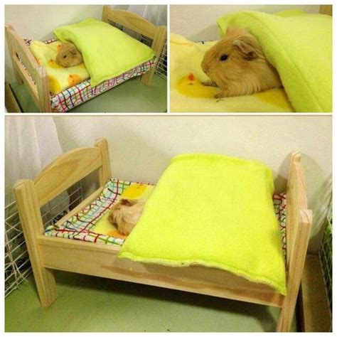 guinea pig bed cuteness pinterest