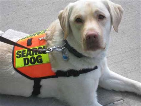 search and rescue dogs the best breeds for search and rescue