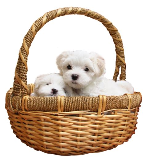 puppy png puppy png transparent image pngpix