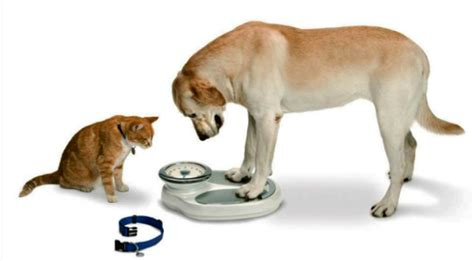 puppy calorie calculator calorie calculator use this free calorie calculator for your