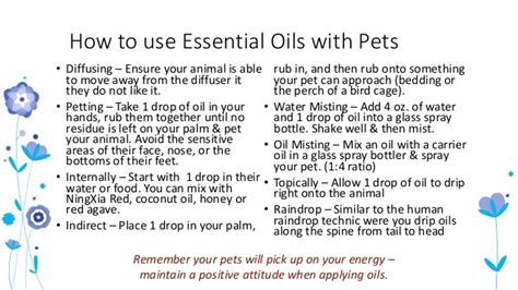 how to get a dog to use the bathroom outside animal wellness with essential oils