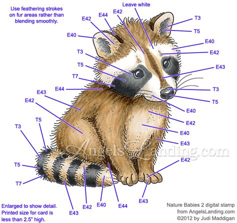 what color are raccoons baby raccoon coloring guide by crafts at splitcoaststers