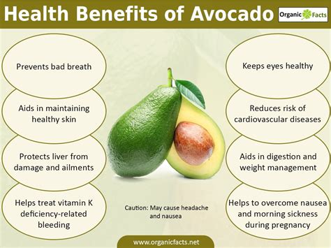 healthy fats in avocado the health benefits of avocado include proper digestion