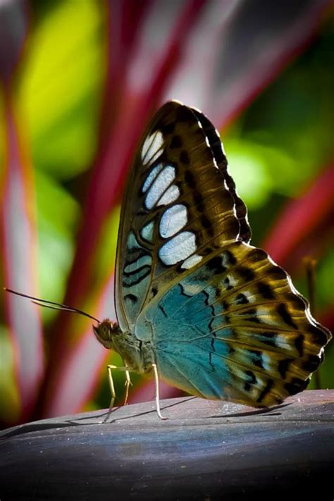 Everyone A Charmer by La Beaut 233 De La Plan 232 Te Jolies Photos De Papillons