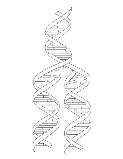 dna coloring page coloring pages
