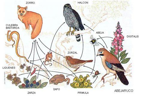 cadenas troficas terrestres ejemplos zoolog 237 a aplicada