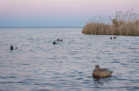 layout hunting for diver ducks diver hunting avoid the awful 8 realtree