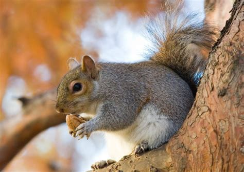 how do squirrels hibernate in the winter anifa blog