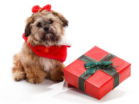 christmas presents for dogs new year s 2014 treats