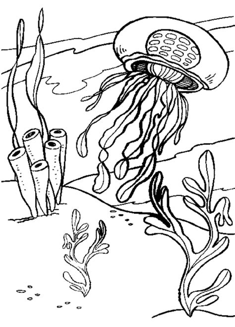 realistic jellyfish coloring pages coloring pages of jellyfish coloring home