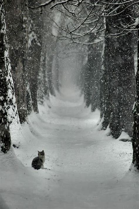 Stopping In Lonely Places snowy path alone cat winter