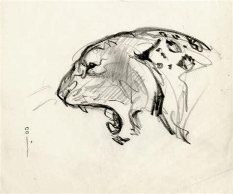 sketchbook big 80 best images about references felidae on leo