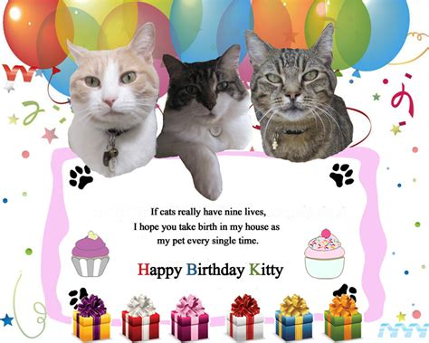 Happy Birthday Wishes To Small Best Birthday Wishes Message For Lovely Cat Wishesmsg