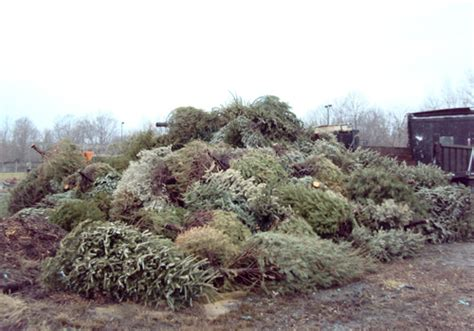easton trees become poplar island habitat local