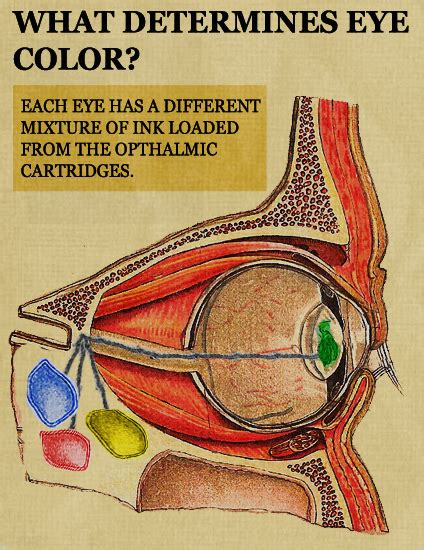 what determines eye color science updated science what determines eye color