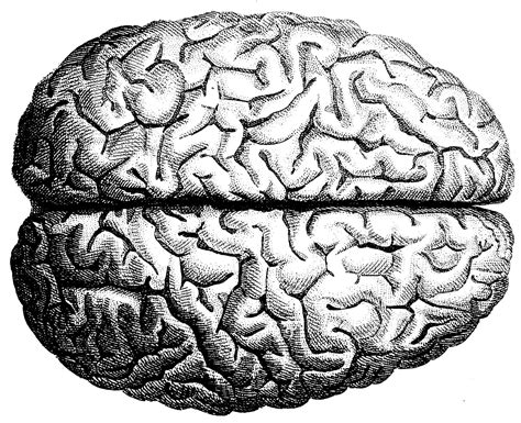 brain pattern drawing the human brain human anatomy the human skull old medical