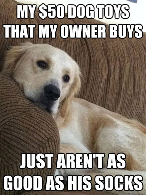 the funniest first world dog problems memes
