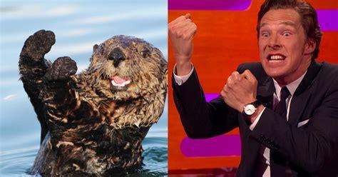 Benedict Cumberbatch Otter Meme - watch benedict cumberbatch make otter faces vulture
