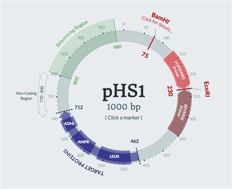map drawing software any recommendations for software for drawing plasmid maps