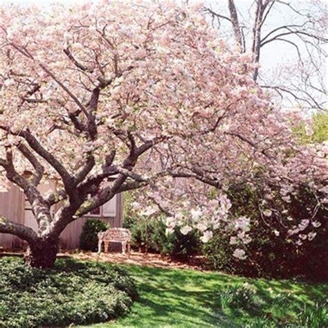best tree to plant in backyard bomen kiezen voor tuin interiorinsider nl