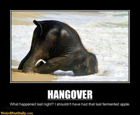 Hangover Meme - funny pictures weirdnutdaily elephant hangover