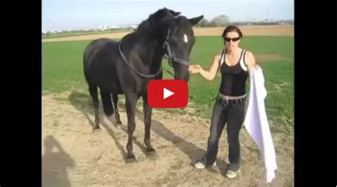 easy tricks to teach your 5 simple tricks to teach your easy and the horseaholic